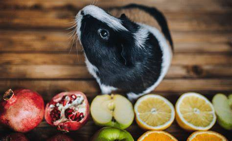 What fruits can guinea pigs eat? (Fruit list, Serving size & more)